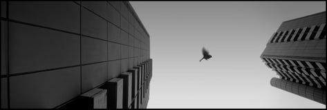 我鸟的飞行 免版税库存照片