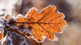 我们的叶子有弄脏的背景 免版税图库摄影