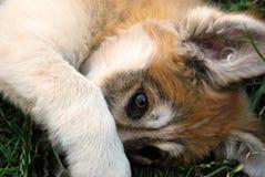 我们的宠物 免版税图库摄影
