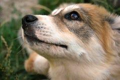 我们的宠物 免版税库存图片
