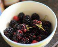 从我们的庭院的果子 免版税库存照片