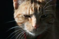 我6只猫的货币 库存图片