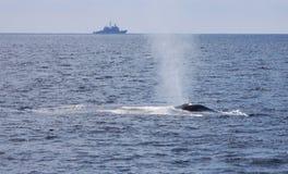 战争和和平-蓝鲸和军舰 免版税库存照片
