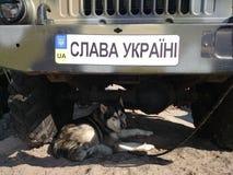 战争在乌克兰2014-2015 免版税库存照片