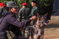 战争训练狗  免版税库存照片