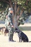 战争训练狗  库存图片