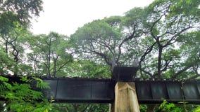 战争死亡铁路在大老树下在Karnchanaburi泰国 库存照片