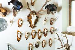 战利品的汇集在猎人的客舱的 库存照片