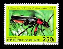 战士甲虫(Cantharis fusca),昆虫serie,大约1998年 库存照片