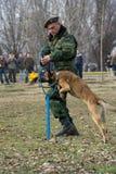 战士训练狗 免版税库存照片