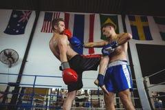 战斗在拳击台的拳击手 库存照片
