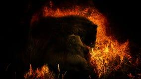 战斗在火摘要的熊 股票录像