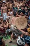 战斗在巴厘岛印度尼西亚的Pandan 库存图片