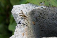 战斗昆虫 库存图片
