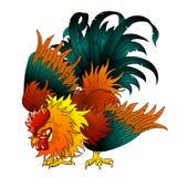 战斗的黑红色雄鸡 免版税库存图片