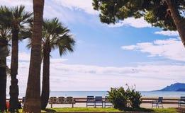 戛纳`著名Croisette ` s海边步行、plams和蓝色椅子 免版税库存图片