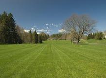 截去的草坪 免版税库存图片