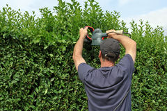 截去树篱,从事园艺 免版税库存图片