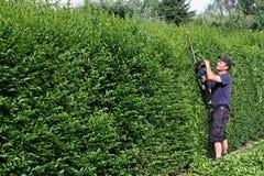 截去树篱,从事园艺 免版税图库摄影