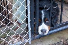 戳他的头的哀伤的狗通过篱芭 免版税库存图片