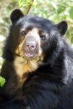 戴了眼镜熊的纵向 免版税库存图片