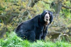戴了眼镜的熊 免版税图库摄影