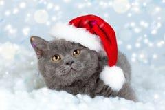 戴圣诞老人帽子的小猫 免版税库存照片
