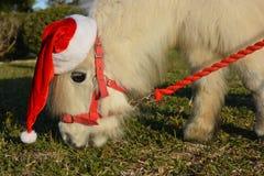 戴圣诞老人帽子的逗人喜爱的小的马 免版税库存照片