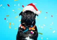 戴圣诞老人帽子的黑哈巴狗 免版税图库摄影