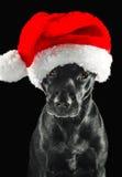 戴圣诞老人帽子的黑色拉布拉多混合狗 免版税库存图片
