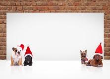 戴圣诞老人帽子的4小犬座临近广告牌 免版税库存图片