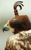 戴头巾的鸟 库存图片