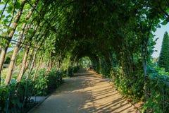 戴安娜Memorial Garden公主绿色隧道在海德公园 免版税库存照片