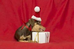 戴着圣诞老人帽子的圣诞节狗 免版税库存照片