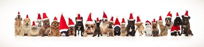 戴着圣诞老人帽子的许多圣诞节猫和狗队  免版税库存图片