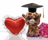 戴着毕业帽子的一个软的玩具 库存图片