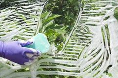戴着防护手套的妇女洗涤窗口 库存图片