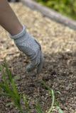 戴着防护手套的妇女,种植在地面 免版税库存图片