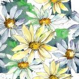 戴西花 花卉植物的花 无缝的背景模式 免版税库存图片