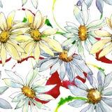戴西花 花卉植物的花 无缝的背景模式 免版税库存照片
