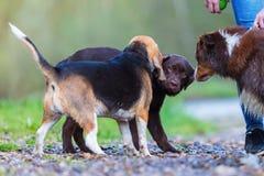 户外三条狗会议  库存照片