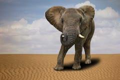 户外孤立非洲大象在白天 免版税库存图片