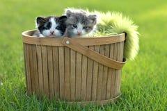 户外小猫在自然光 库存照片