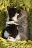 户外小猫在自然光 库存图片