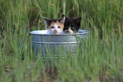 户外小猫在高绿草 免版税库存照片