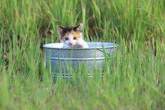 户外小猫在绿色高草在一个晴天 免版税库存照片