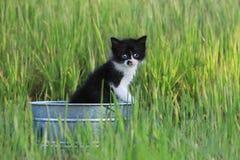 户外小猫在绿色高草在一个晴天 库存图片