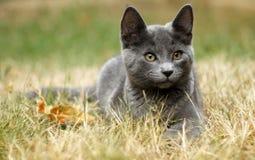 户外小猫 图库摄影