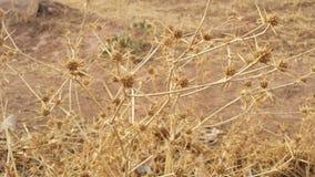 户外干燥植物在mountans 免版税图库摄影