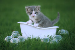 户外新出生的小猫纵向在绿色草甸 免版税库存图片